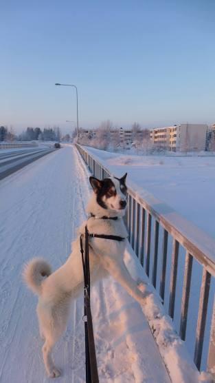 Valkko sillalla