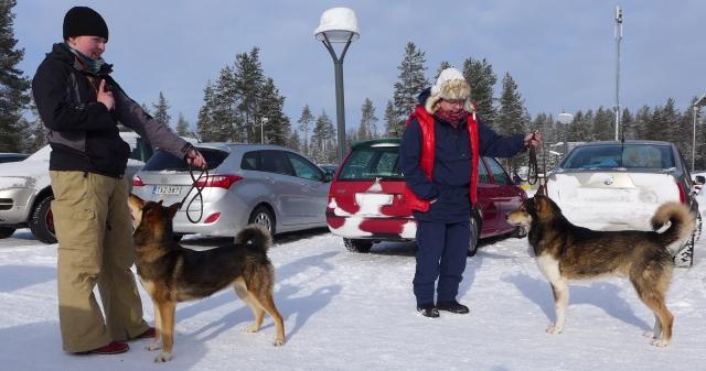 Eräjätkän Ora ja Urpon Harald, Laikajärjestön päänäyttely 4.4.2018. Isä ja tyttö samassa kuvassa